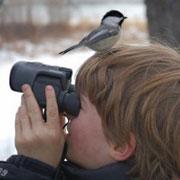 Наблюдение за птицами или «Птичий бизнес»?